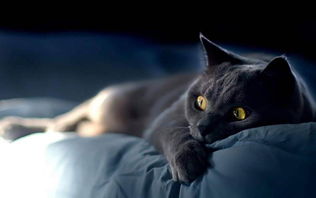 Сонник много котят и кошек. к чему снится много котят и кошек видеть во сне - сонник дома солнца