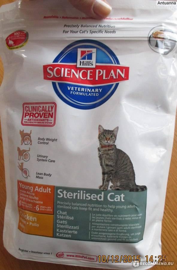 Хиллс, проплан и другие корма для кошек vs «натуралка» – что лучше?