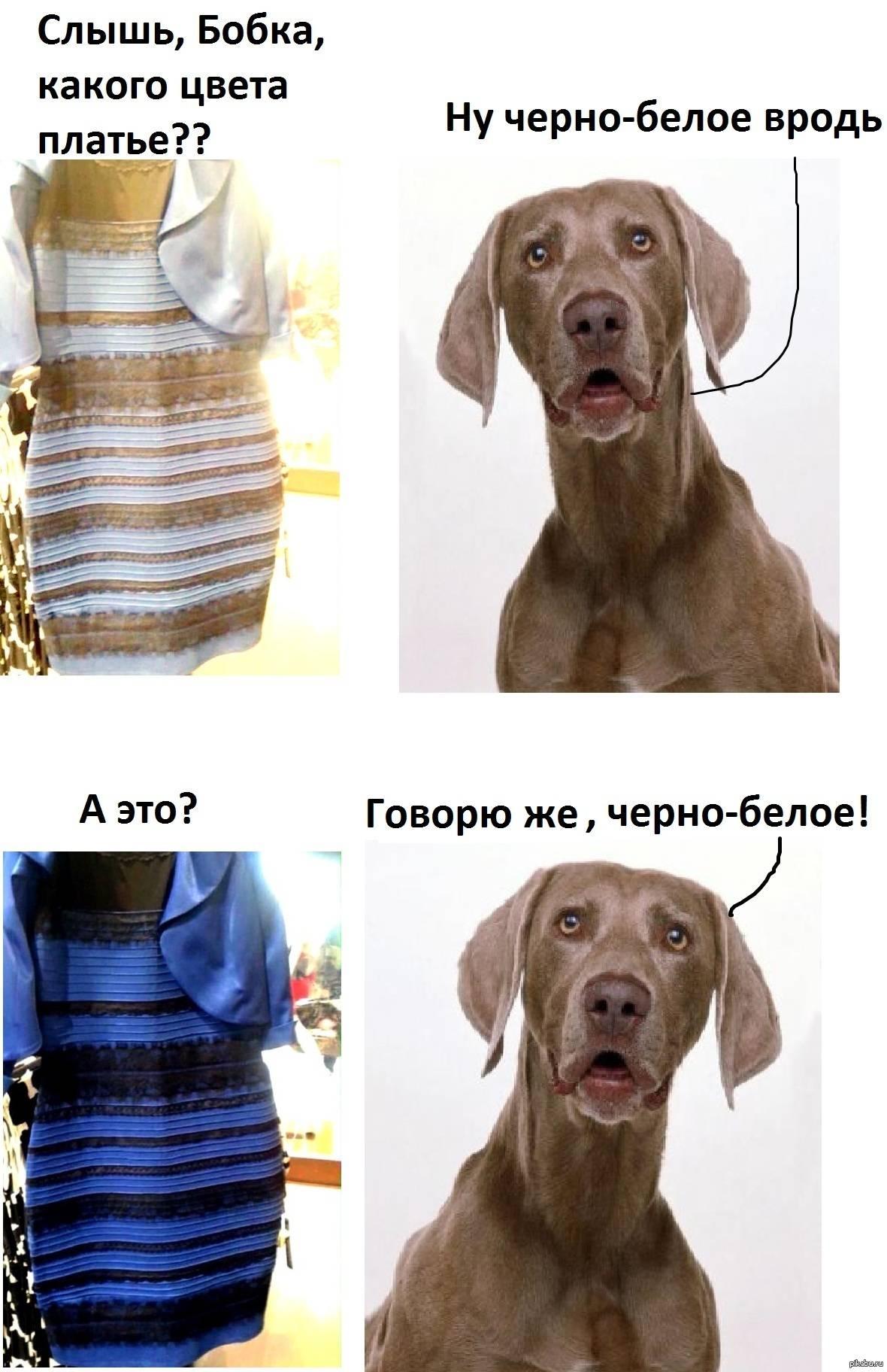 Как животные видят? какие цвета различают?