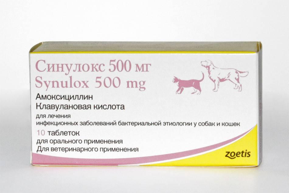Лечение кошки антибиотиками – подробная инструкция для хозяев