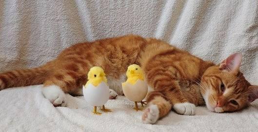 Сырой желток котенку. можно ли кошкам яйца? правила кормления котёнка