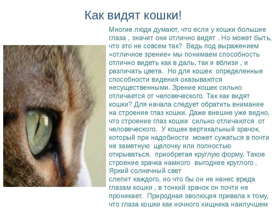 Почему зрачки у кошки разного размера – один больше другого, в чем причина и что это значит?