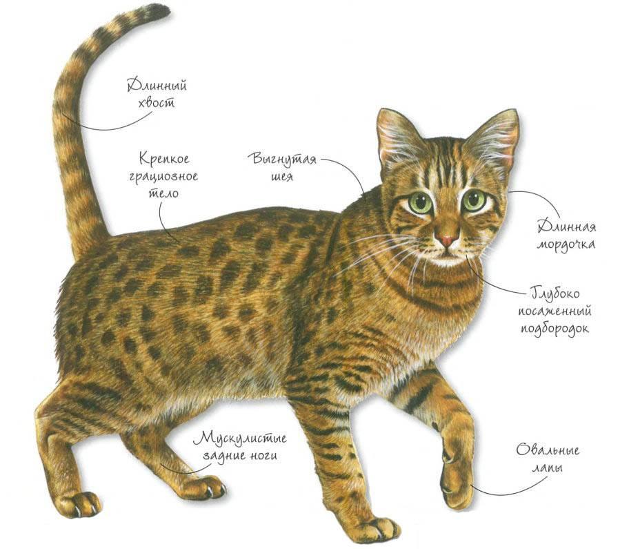 Кошки-долгожители: рекорды россии и мира