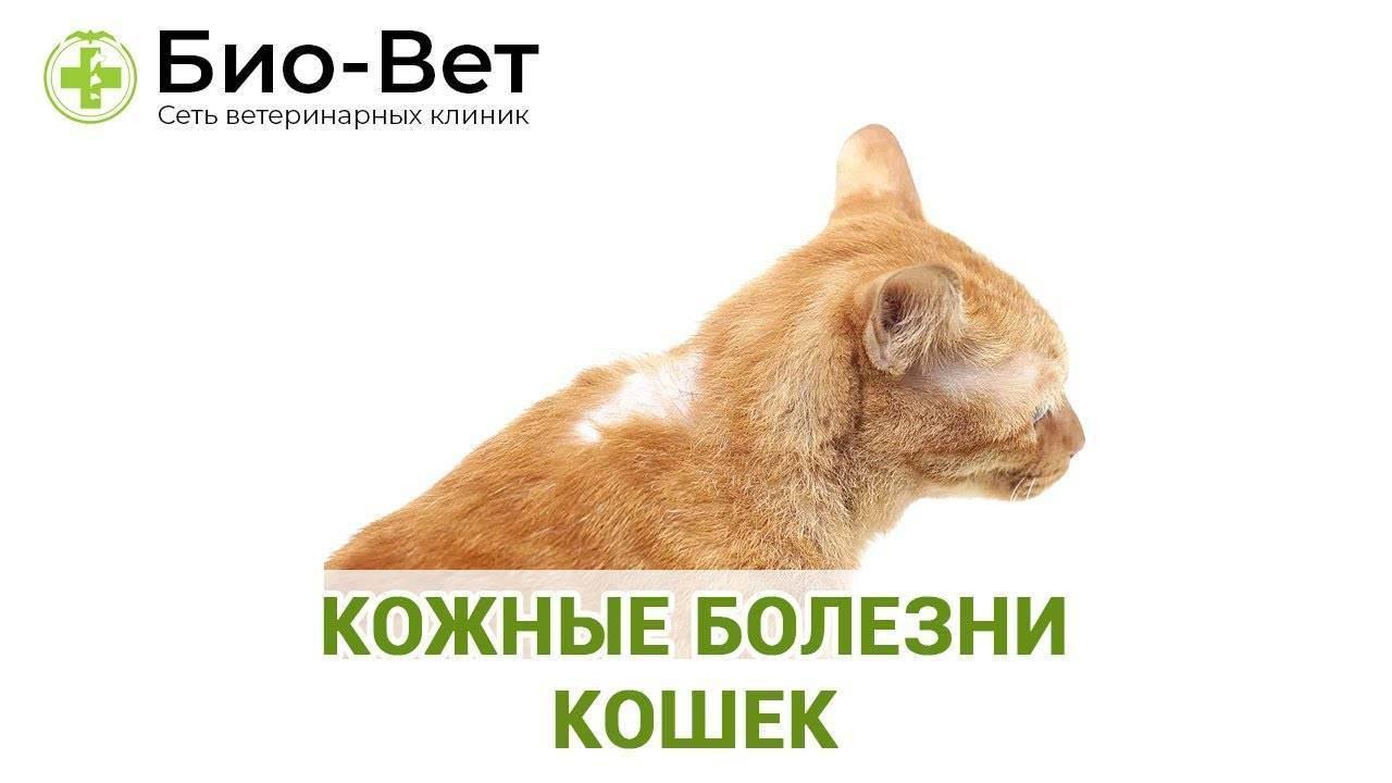 Что это за болезнь – авитаминоз у кошек?