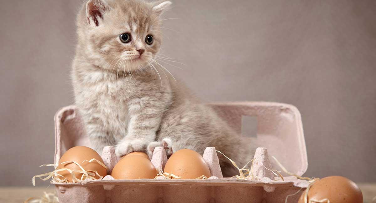 Можно ли кошкам давать сырые яйца?