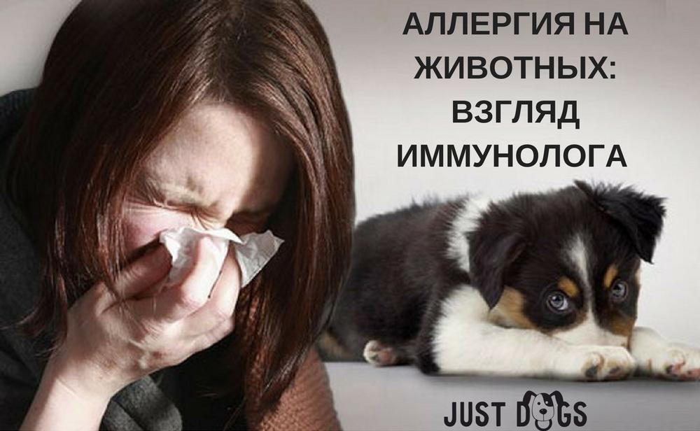 Как появляется аллергия на кошек