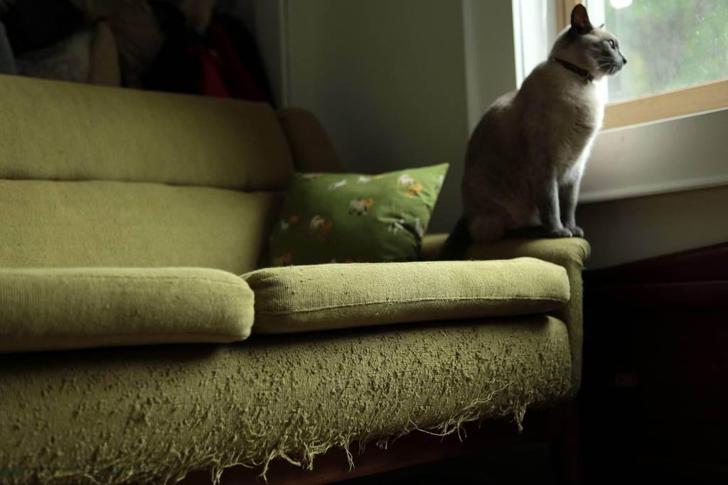 Антивандальная ткань для дивана от кошек: обзор лучших вариантов