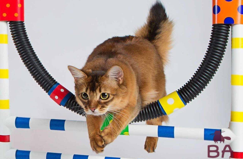 Учим кошку выполнять 8 команд: маленькие секреты и хитрости
