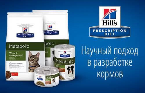Корм хиллс для кошек: обзор видов, советы ветеринара