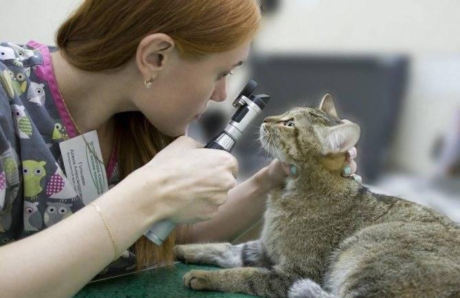ᐉ есть ли пупок у кота: где искать, есть ли он вообще - kcc-zoo.ru