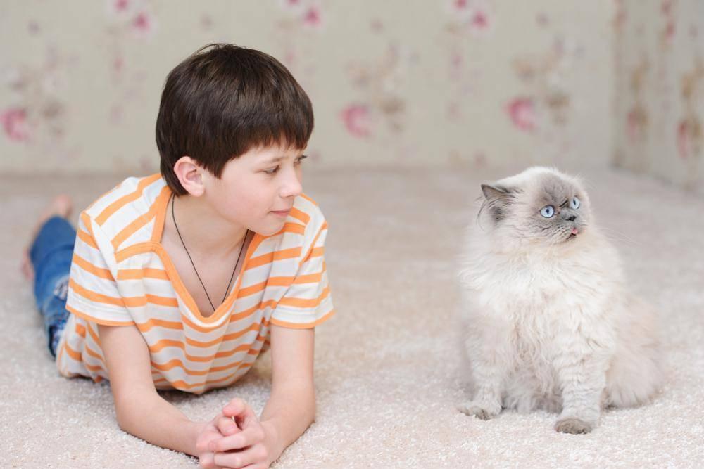 Породы кошек для детей, фото и названия: какого питомца лучше выбрать для малыша?