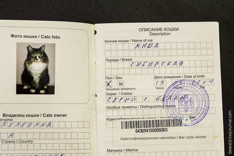 Ветеринарный паспорт для кошки: как получить и заполнить правильно
