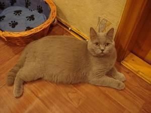 Как можно определить беременность кошки?