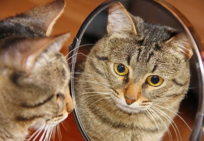 Сонник кошка смотрит в зеркало. к чему снится кошка смотрит в зеркало видеть во сне - сонник дома солнца