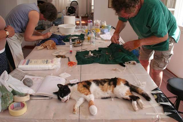 Стерилизация кошки: основные плюсы и минусы