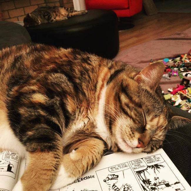 Из чего делают сухой корм для кошек. краткая история