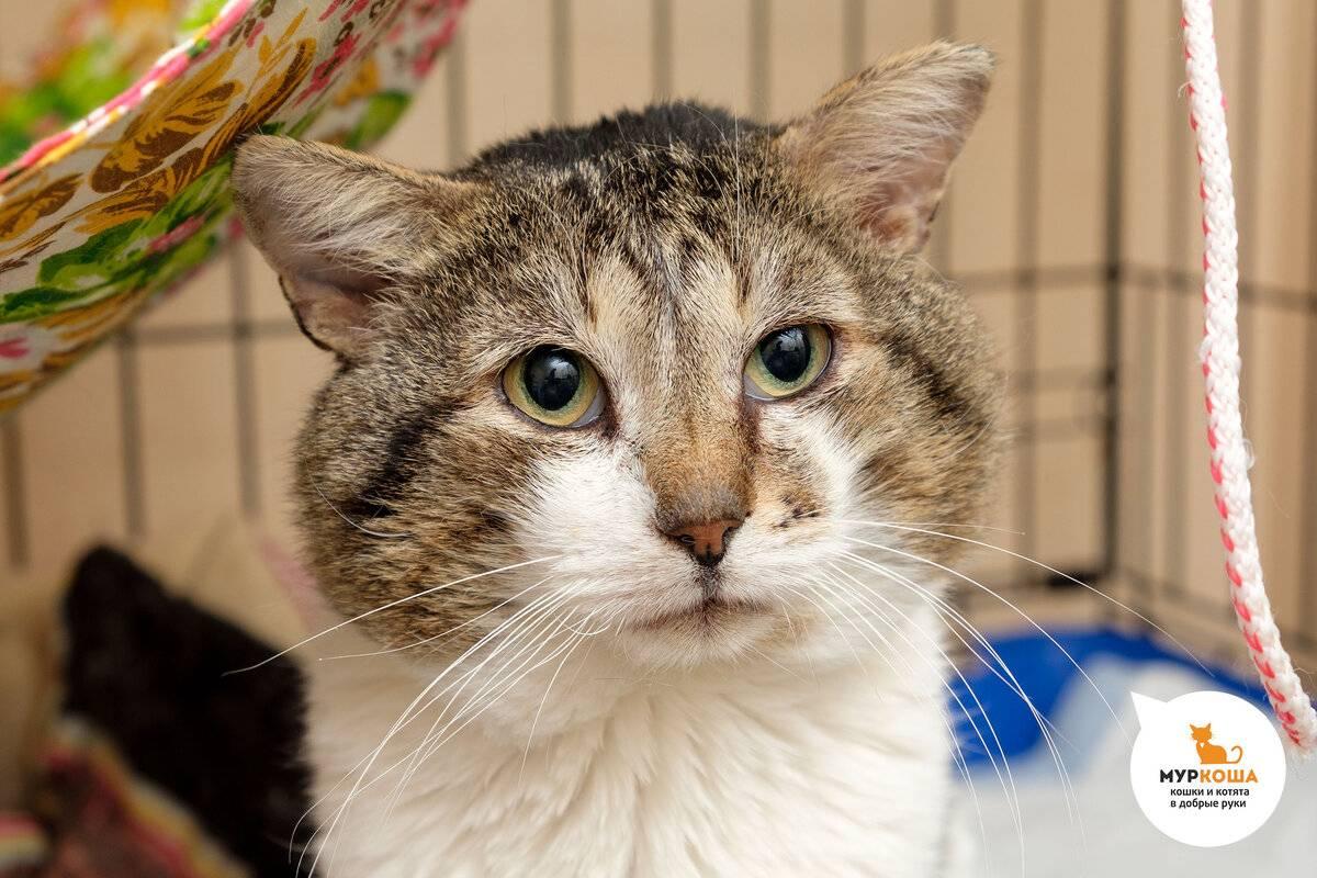 Почему кошка или кот чешет уши и трясет головой