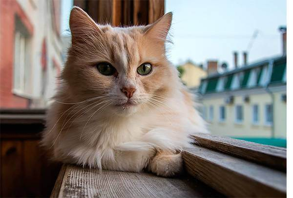 Вакцинация кошек: нужно ли это вам? - всё о кошках и котах
