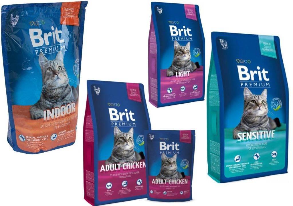 Самый хороший сухой корм для кошек по мнению ветеринаров: рейтинг лучших