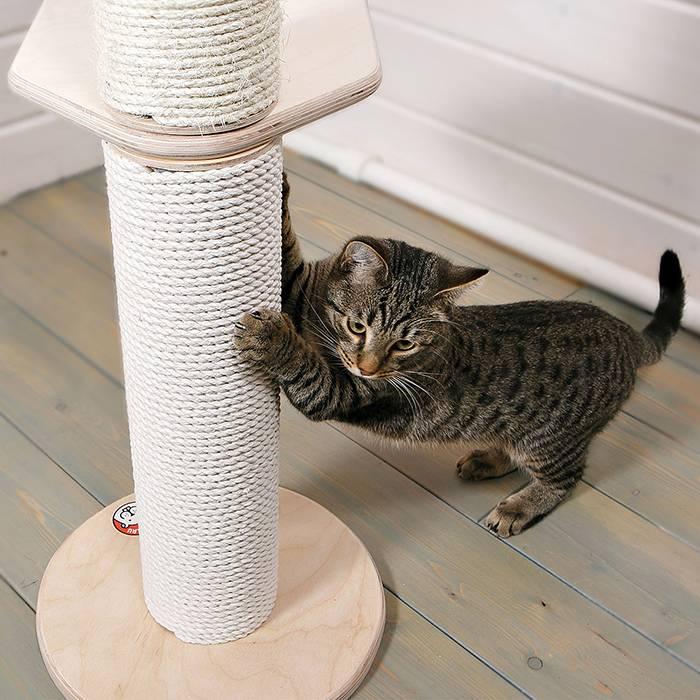 Как приучить кошку и котенка к когтеточке