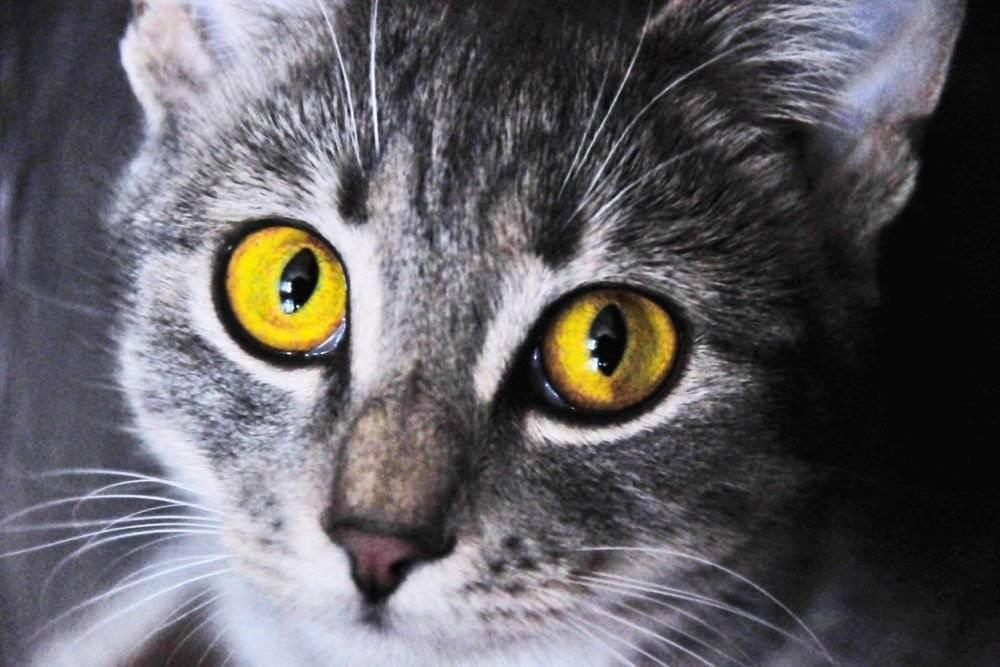 """Проект """"мир кошек""""   социальная сеть работников образования"""