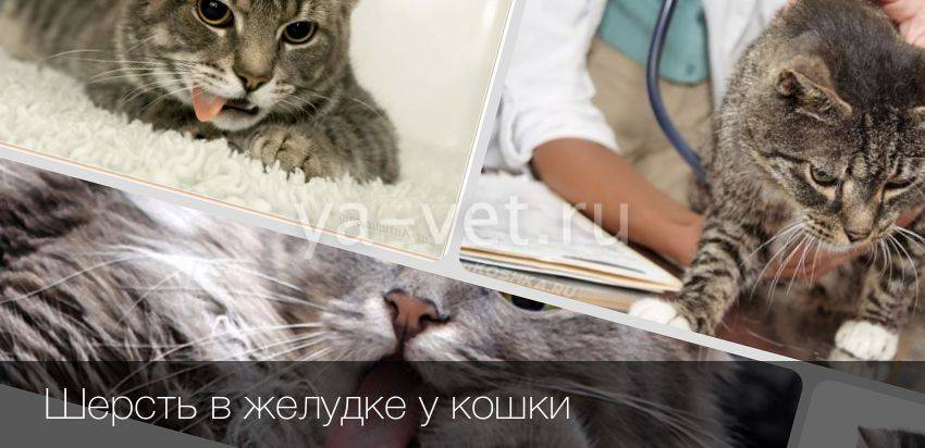 У кошки комок шерсти в кишечнике у