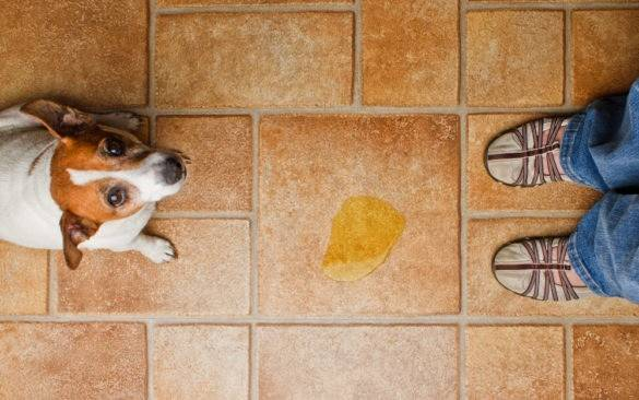 Как отучить кота метить территорию в квартире: советы и методы борьбы
