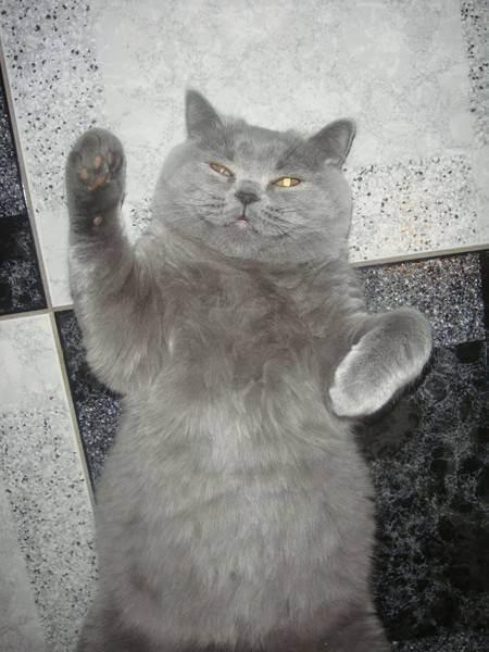 Почему у кошки обвис живот