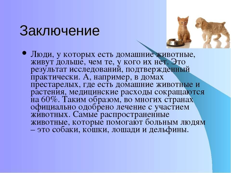 Польза и вред от кошек дома » интересные факты: самое невероятное и любопытное в мире