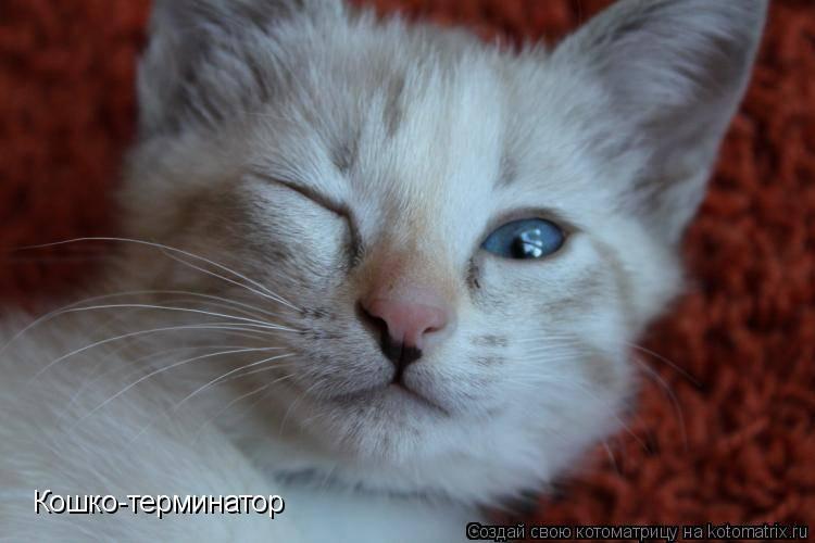 Если долго смотреть кошке в глаза, она медленно моргает. ученые объяснили, что она хочет этим сказать