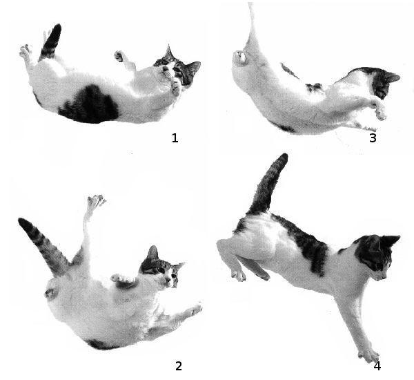 Сколько жизней у кошки или кота: 9 или 7, причины появления такого суеверия, почему оно популярно