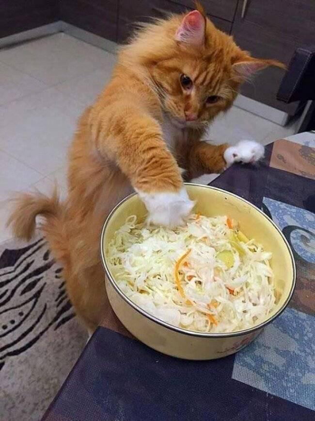 Какие овощи едят кошки: полезны сырые или подваривать, можно ли давать коту варёные овощи, если кормить сухим кормом — какие дают?