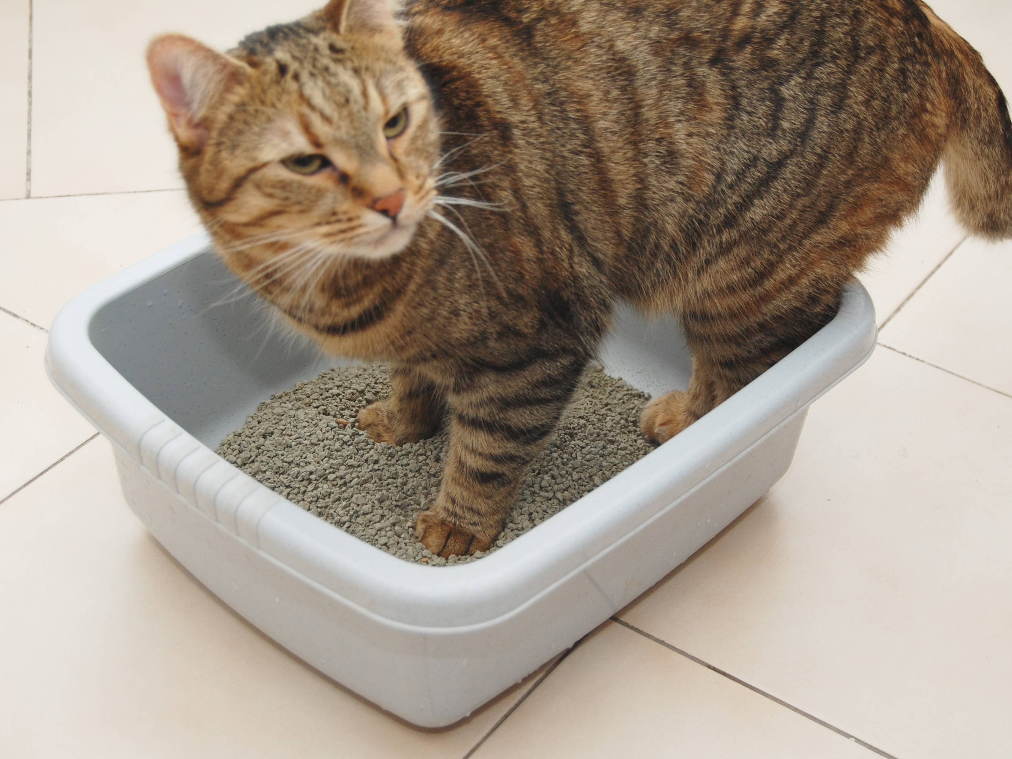 Как приучить кота к лотку — советы и рекомендации | вокруг нас