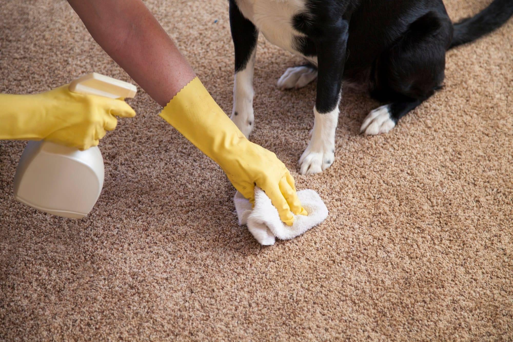 ?чем и как убрать кошачий запах мочи с дивана в домашних условиях: отзывы с форумов, средства с кухни, какие ошибки нельзя допускать. чистка перекисью, уксусом, содой, доместосом и другими препаратами. почему кот писает на диван, и как его отучить?