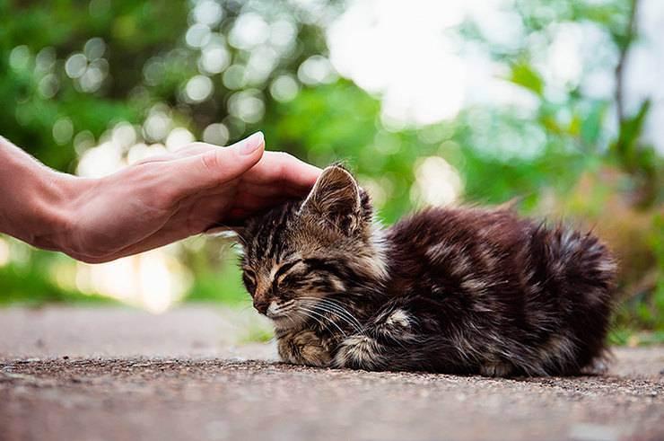 Кот, кошка, котёнок… найди на улице своё счастье!