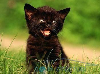 Кот дрожит во время сна. кот дрожит — полный список причин от ветеринара