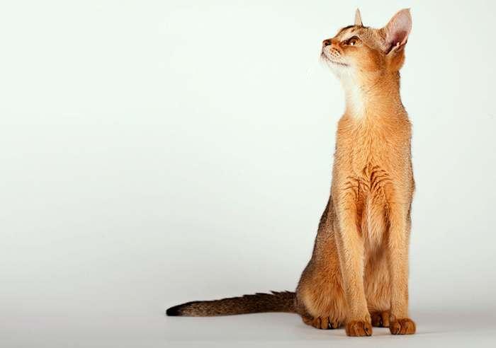 Сколько кормить кота сухим кормом — нормы и число кормлений