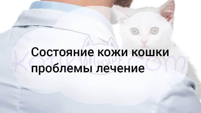 Всё об аллергии на кошек: причины и симптомы, методы лечения