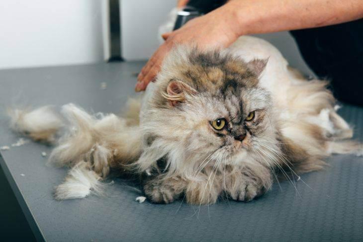 Тепловой удар у кошки