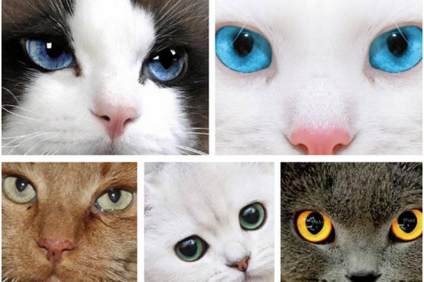 Как определить породу кошек? 29 фото как узнать породу кота по внешним признакам? определяем породистость котенка по фотографии. другие способы