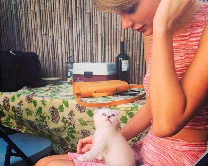 Cкотиш фолд очень нужен совет!!! - запись пользователя dominoshka (margaritkaapril) в сообществе домашние животные в категории кошки. болезни, прививки, советы по уходу - babyblog.ru