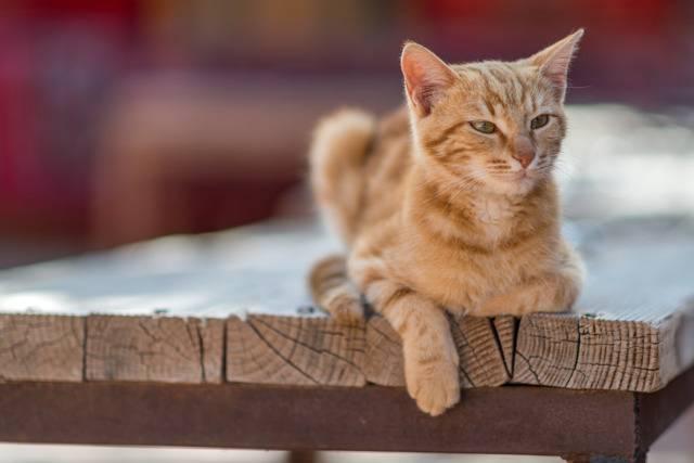 Что сулит рыжий кот в доме что сулит рыжий кот в доме
