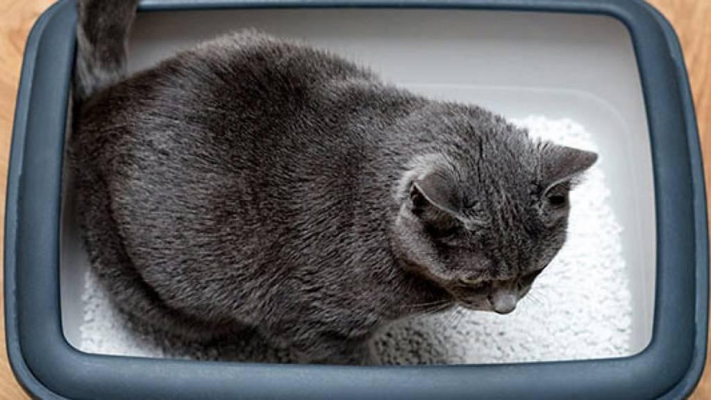 Возможные причины почему кот перестал ходить в лоток