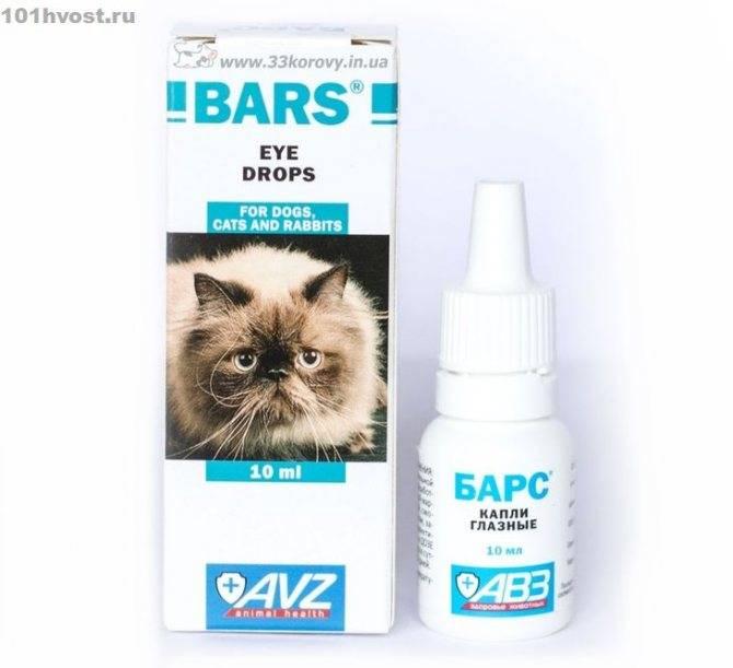 Особенности лечения гноящихся глаз у кошек