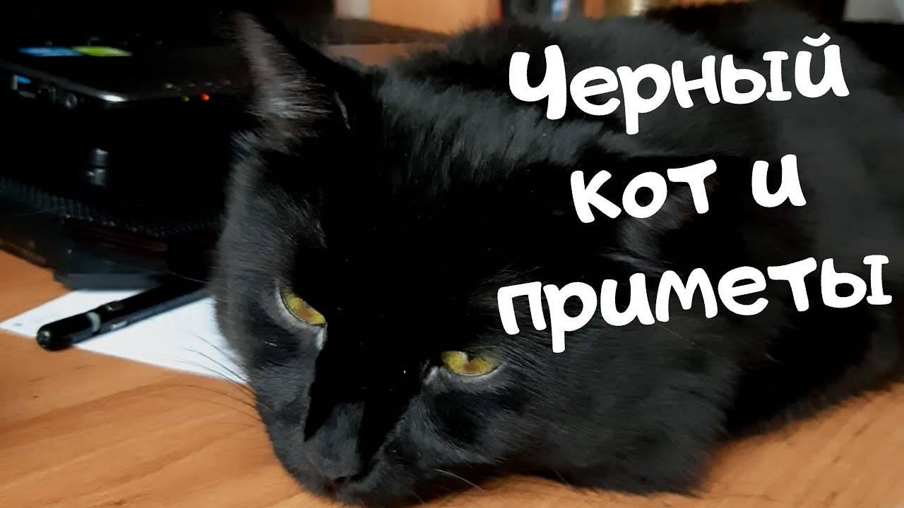 Чего ожидать от встречи с черным котом