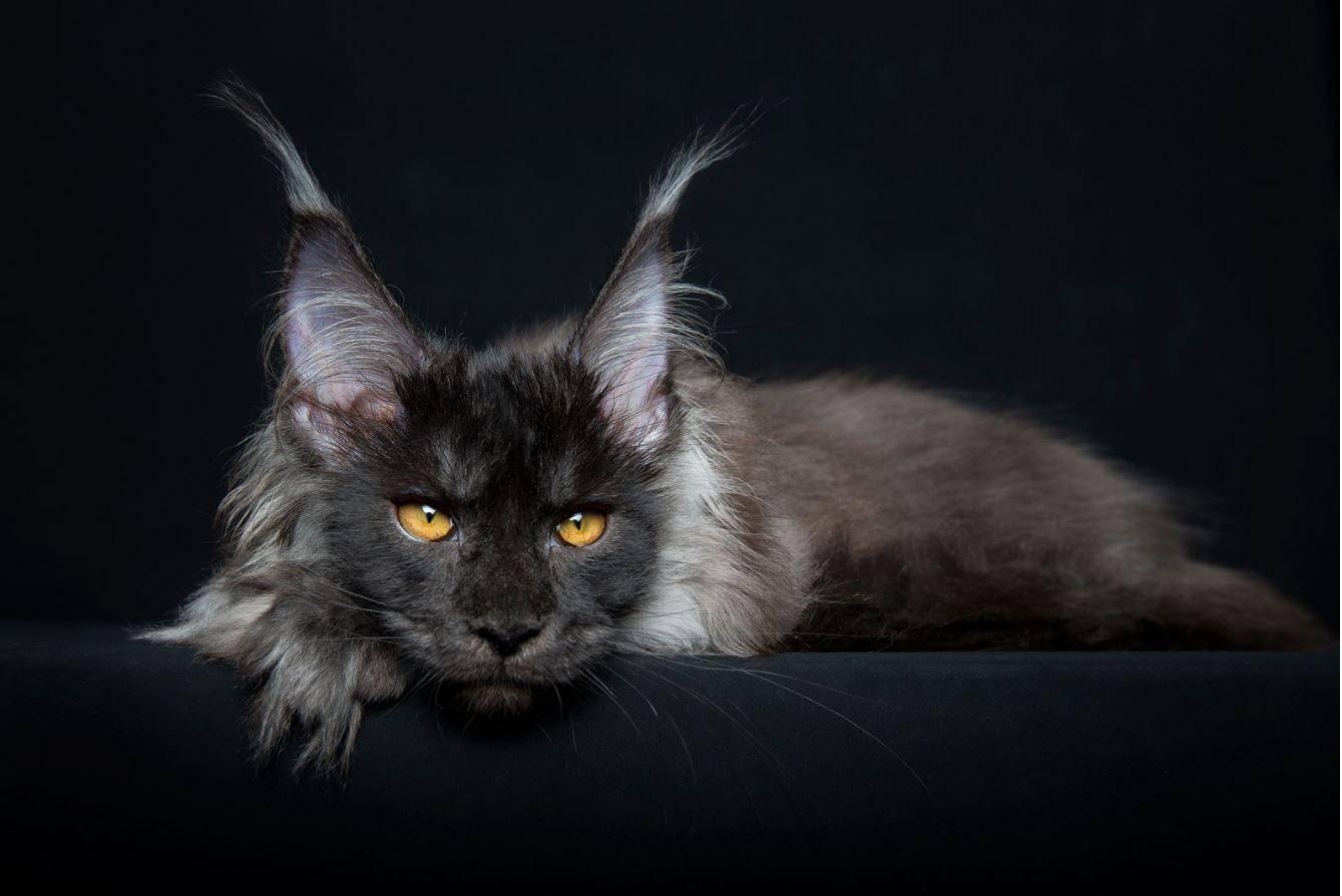 Мой нежный и ласковый кот: 15 пород — 15 характеров