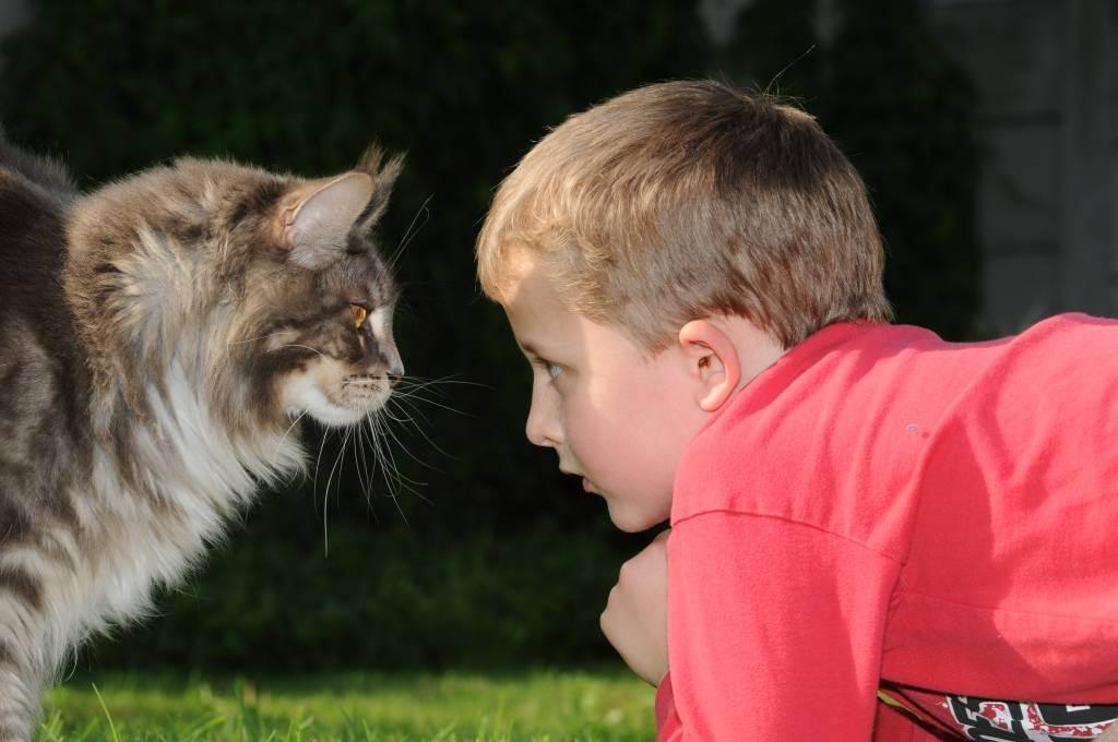 Лучшие породы кошек для ваших детей (+ фото)