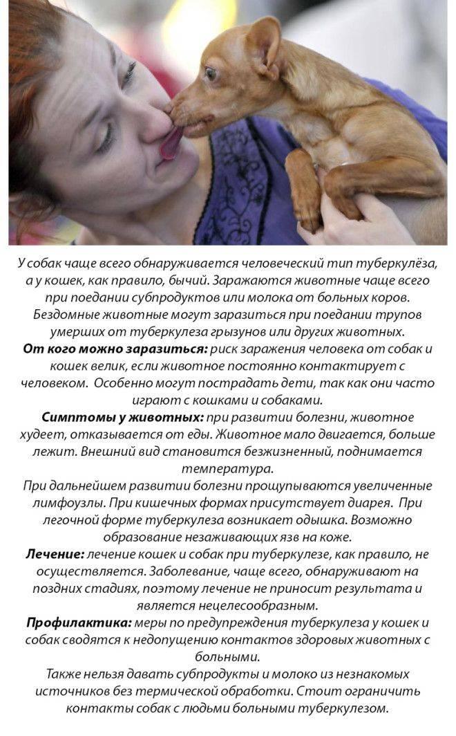 Чем можно заразиться от кошки: мифы и факты | витапортал - здоровье и медицина
