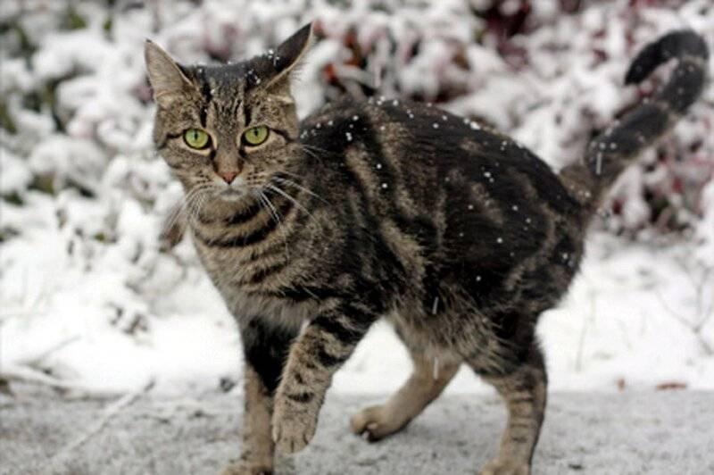 Что будет с кошкой на холоде?