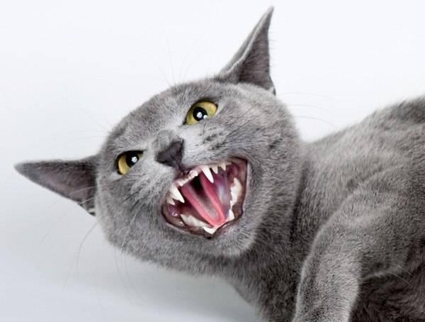 Почему кошки шипят?